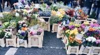 pd flowers vsco